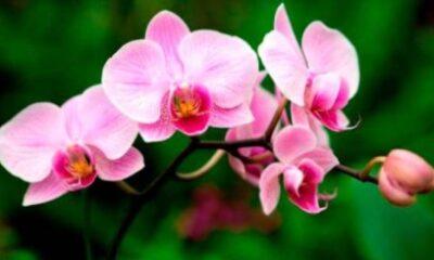 Ministerio de Educación licita compra de orquídeas por casi RD$700 mil