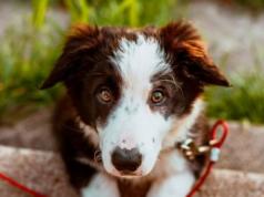 Perro hereda cinco millones de dólares tras la muerte de su propietario en EEUU